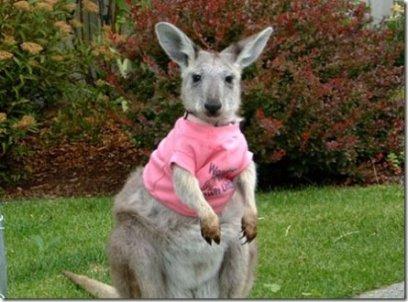 [kangaroo.jpg]